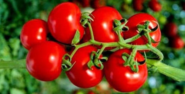 стимулятор для помидоров