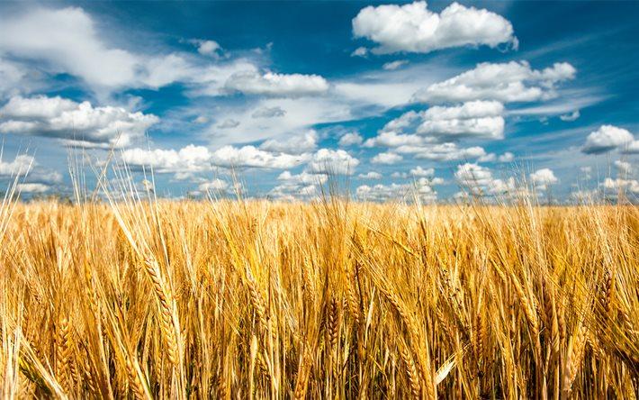стимулятор зерновые
