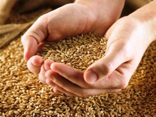 регулятор зерновые